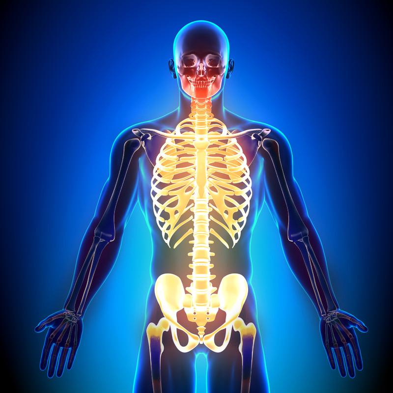 Nakke/rygg/bekken/brystkasse/ribben